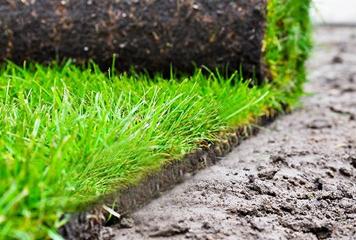 Газон посевной и газон рулонный в Рыбинске и Ярославской области