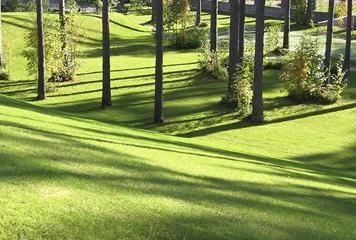 Посадка деревьев и кустарников в Рыбинске и Ярославской области