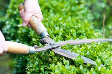 Скос травы и стрижка газонов