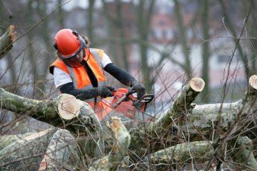 Выкорчевывание пней спил деревьев